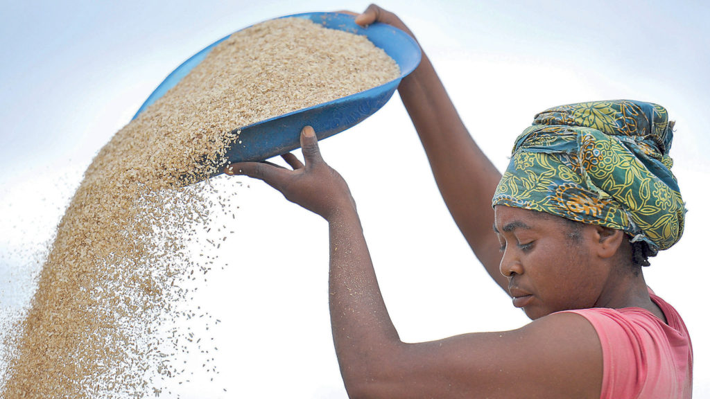 Nigeria's quest to rice production sufficiency