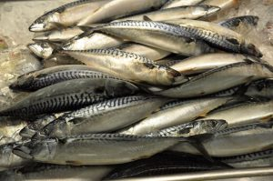 Mackerel fish. Credit - commons.wikimedia.org