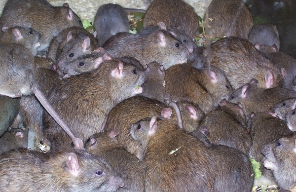Medical Doctor Contacts Lassa Fever In Kogi State, Residents Warned