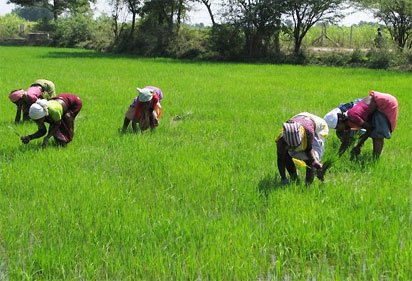 Agriculture Saved Nigeria Economy From Recession - EU Envoy