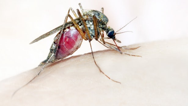 Malaria: Sanitation, Personal Hygiene Can Save govt $300m - Association