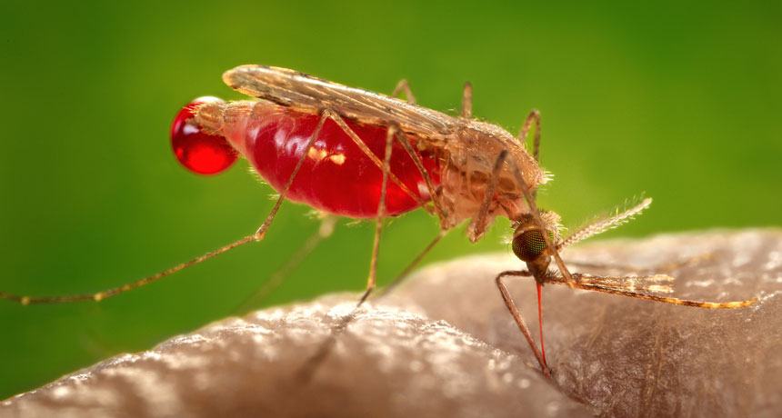 Medical Experts Fear Worldwide Malaria Resurgence