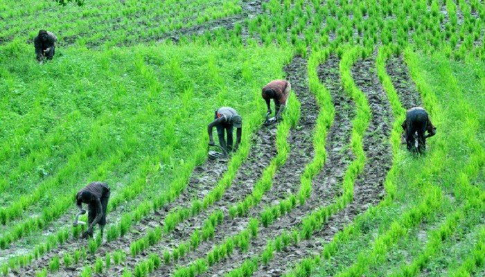 There May Be Famine In Nigeria IfFulani Herdsmen Crisis Persists - Farmers