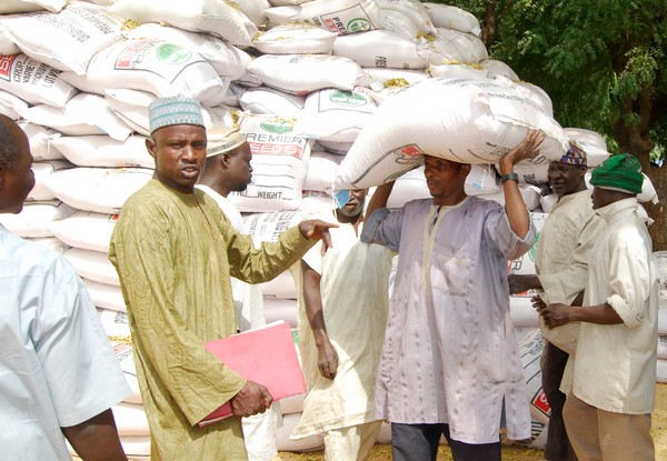 Katsina Begins Distribution of Fertilizer to Farmers At Subsidized Rate