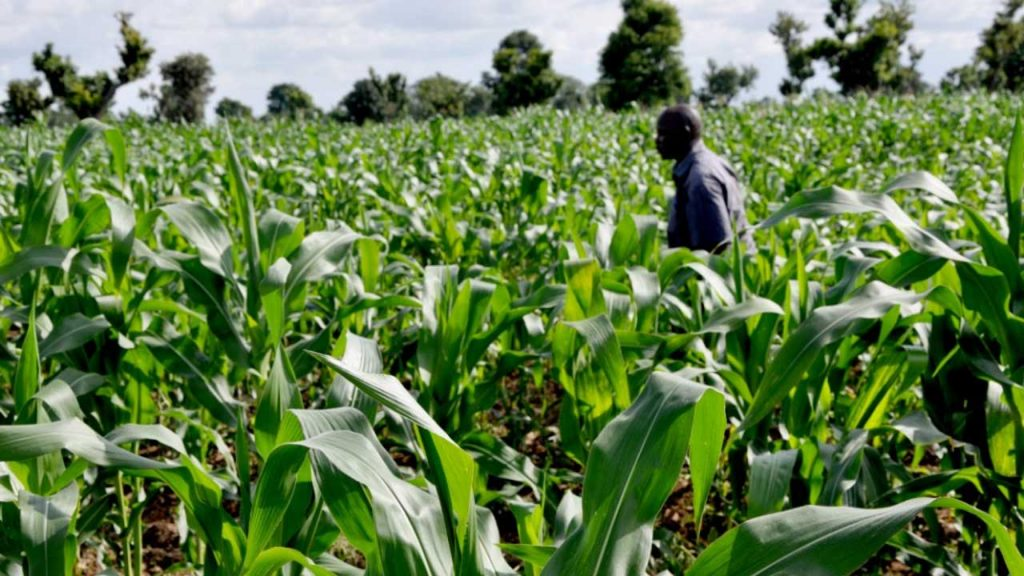 How Nigeria Can Be Leading Nation In Agriculture With ICT – Prof Othman